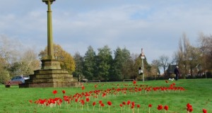 Barlaston poppies (4)