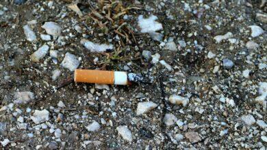 Discarded Cigarette Butt